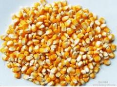 求购:大豆、玉米、高粱、小麦