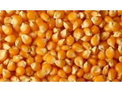 长期现金收购玉米、大豆、高粱、棉粕、豆粕、小麦。