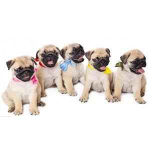 上海进口宠物清洁剂报关