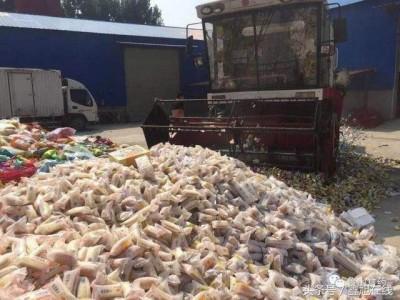 青浦区变质乳制品销毁流程 致电全面了解食品过期是怎样销毁的