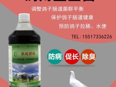 治肉鸽拉稀水便绿便的养鸽益生菌怎么购买