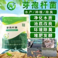 水产专用单菌芽孢杆菌净化水质
