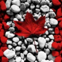 加拿大技术移民就找洲巡出国