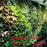 河源户外绿化墙案例分享