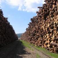 菲律賓柳桉木進口有哪些特殊的單證需要辦理