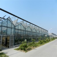薄膜大棚温室工程 连栋薄膜温室大棚专业造价
